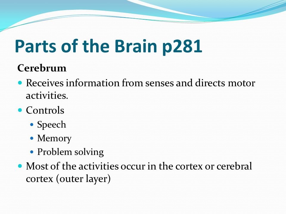 Parts of the Brain p281 Cerebrum Receives information from senses and directs motor activities. Controls Speech Memory Problem solving Most of the act