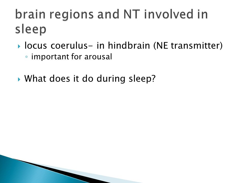  locus coerulus- in hindbrain (NE transmitter) ◦ important for arousal  What does it do during sleep