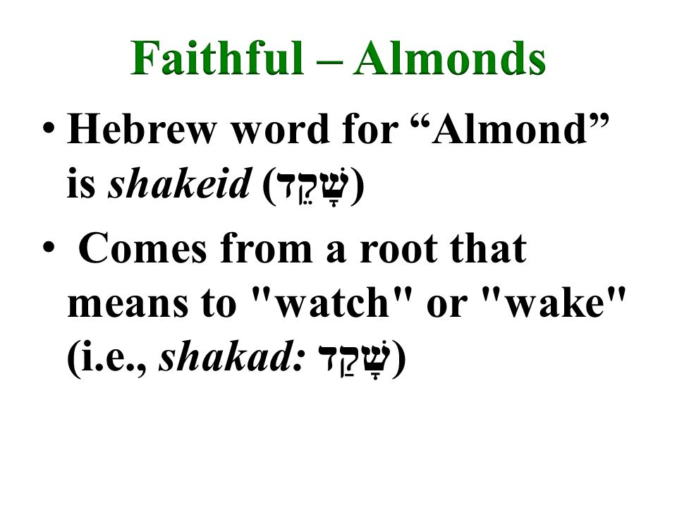 Hebrew word for Almond is shakeid (שָׁקֵד) Comes from a root that means to watch or wake (i.e., shakad: שָׁקַד)