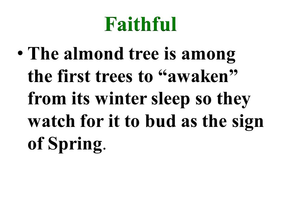 The almond tree is among the first trees to awaken from its winter sleep so they watch for it to bud as the sign of Spring.