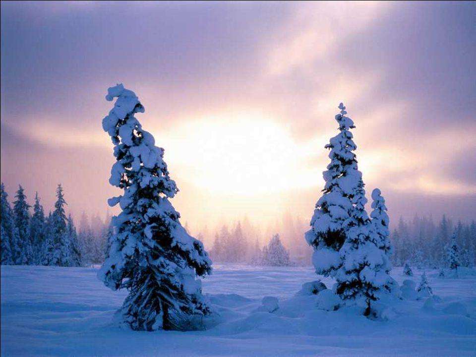 Music & Lyrics: Enya – I May Not Awaken t@o Winter III Snow Dressed Trees