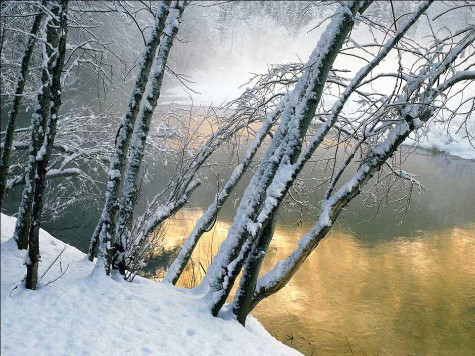 Winter III Snow Dressed Trees