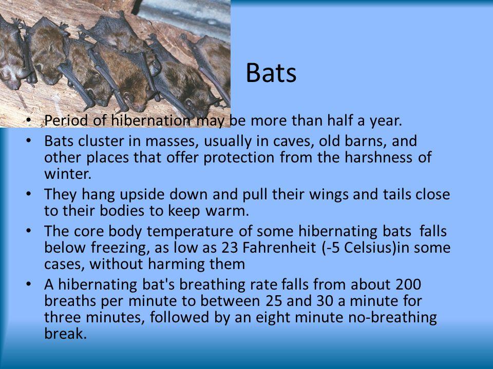 Bats Period of hibernation may be more than half a year.