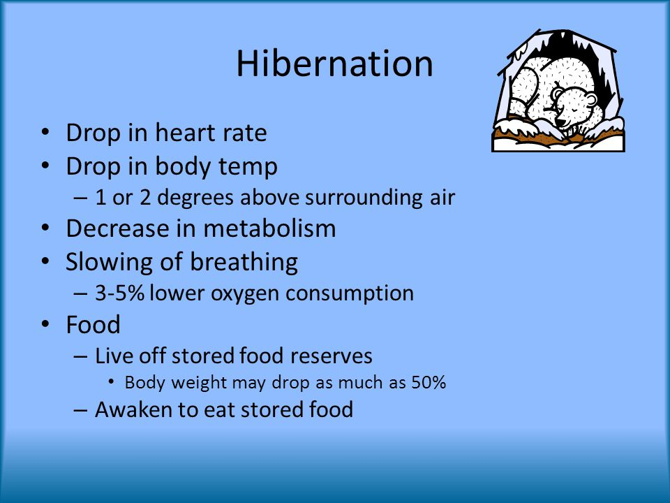 Hibernation Drop in heart rate Drop in body temp – 1 or 2 degrees above surrounding air Decrease in metabolism Slowing of breathing – 3-5% lower oxygen consumption Food – Live off stored food reserves Body weight may drop as much as 50% – Awaken to eat stored food