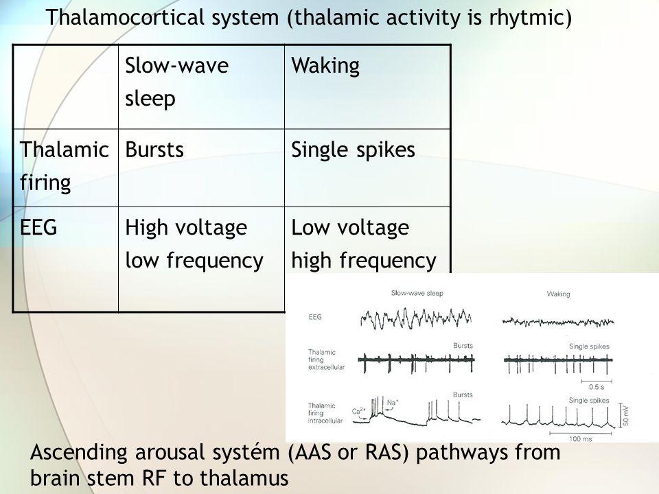 Thalamocortical modulation