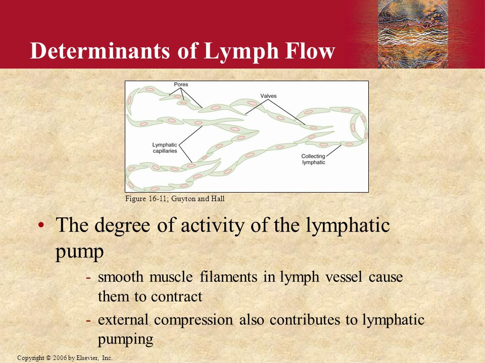 Copyright © 2006 by Elsevier, Inc. Determinants of Lymph Flow The degree of activity of the lymphatic pump -smooth muscle filaments in lymph vessel ca