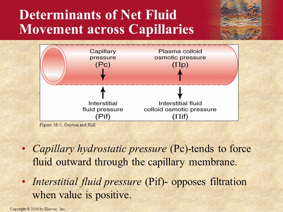 Copyright © 2006 by Elsevier, Inc. Determinants of Net Fluid Movement across Capillaries Capillary hydrostatic pressure (Pc)-tends to force fluid outw