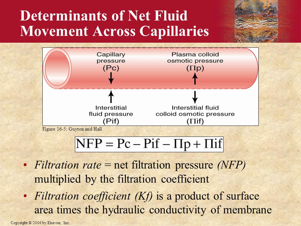 Copyright © 2006 by Elsevier, Inc. Determinants of Net Fluid Movement Across Capillaries Filtration rate = net filtration pressure (NFP) multiplied by