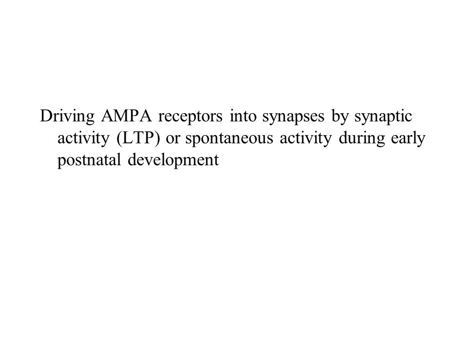 Driving AMPA receptors into synapses by synaptic activity (LTP) or spontaneous activity during early postnatal development