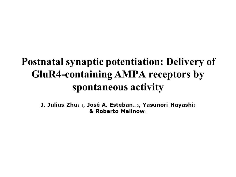 Postnatal synaptic potentiation: Delivery of GluR4-containing AMPA receptors by spontaneous activity J.