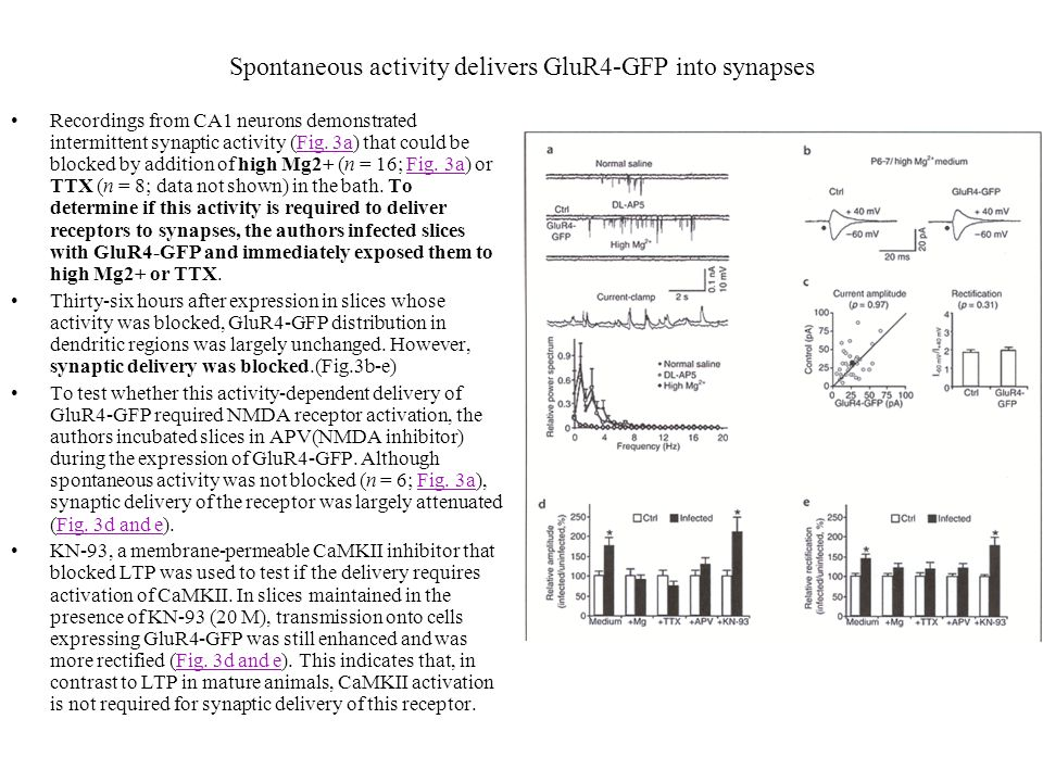 Spontaneous activity delivers GluR4-GFP into synapses Recordings from CA1 neurons demonstrated intermittent synaptic activity (Fig. 3a) that could be