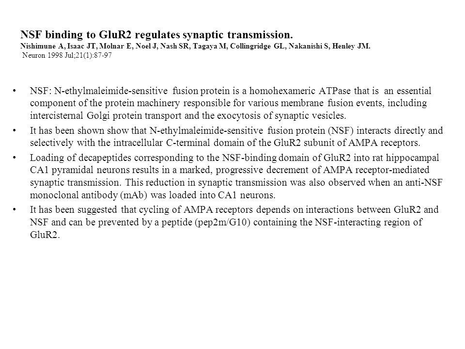 NSF binding to GluR2 regulates synaptic transmission.