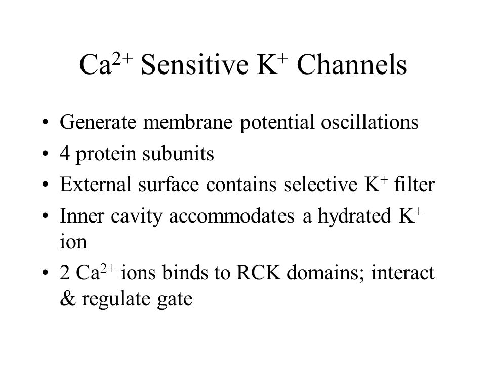 Ca 2+ Sensitive K + Channels Generate membrane potential oscillations 4 protein subunits External surface contains selective K + filter Inner cavity accommodates a hydrated K + ion 2 Ca 2+ ions binds to RCK domains; interact & regulate gate