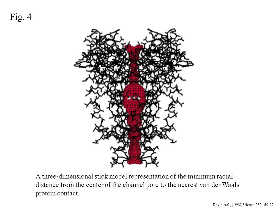 A three-dimensional stick model representation of the minimum radial distance from the center of the channel pore to the nearest van der Waals protein contact.