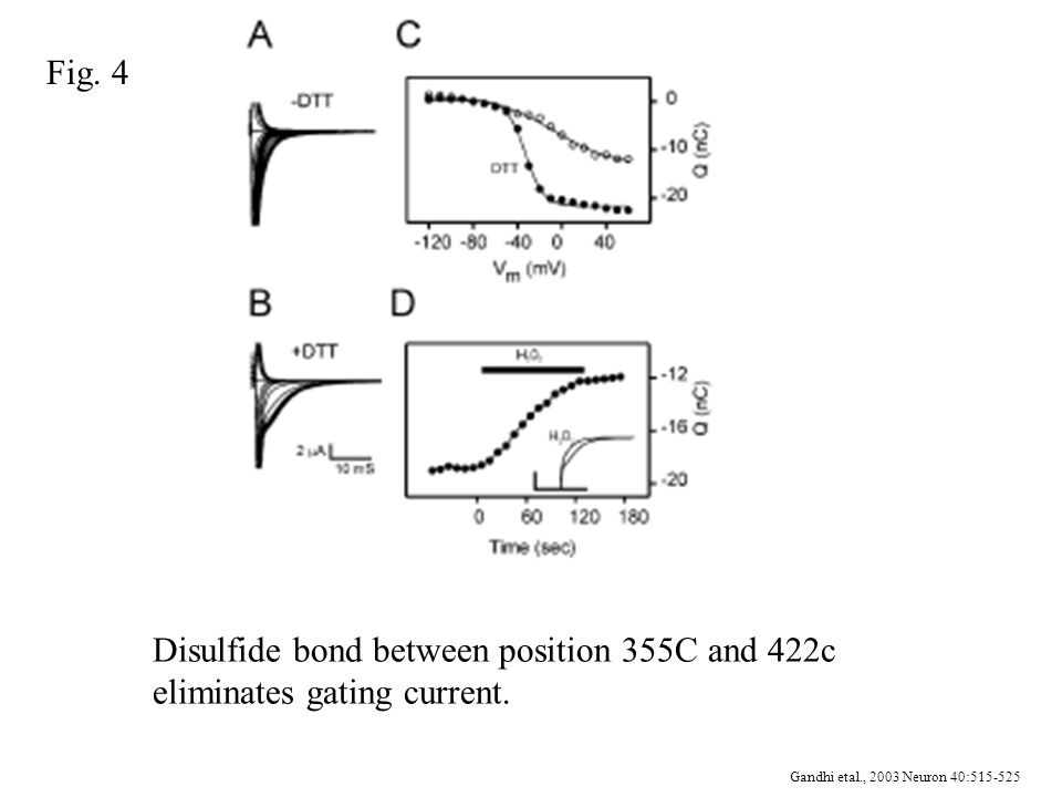 Gandhi etal., 2003 Neuron 40:515-525 Disulfide bond between position 355C and 422c eliminates gating current.