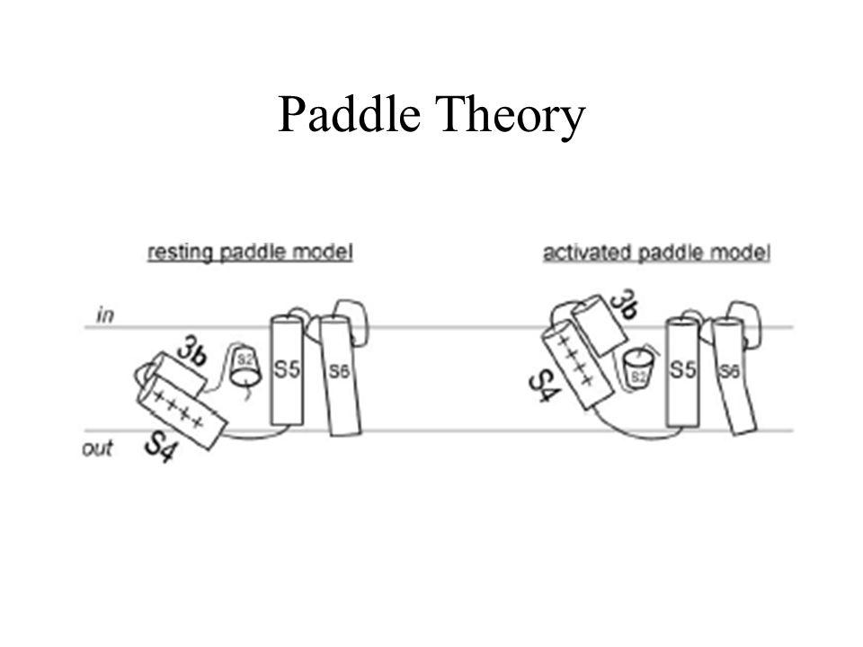 Paddle Theory