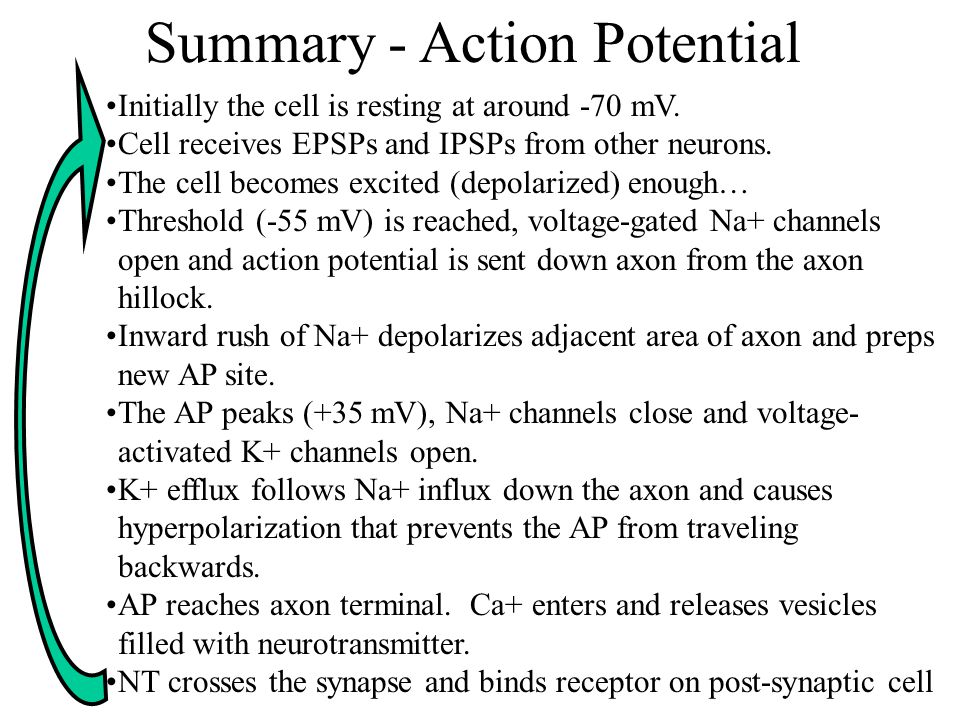 Initially the cell is resting at around -70 mV.Cell receives EPSPs and IPSPs from other neurons.