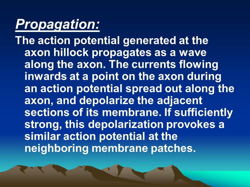 Propagation: The action potential generated at the axon hillock propagates as a wave along the axon. The currents flowing inwards at a point on the ax