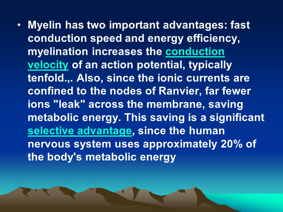 Myelin has two important advantages: fast conduction speed and energy efficiency, myelination increases the conduction velocity of an action potential