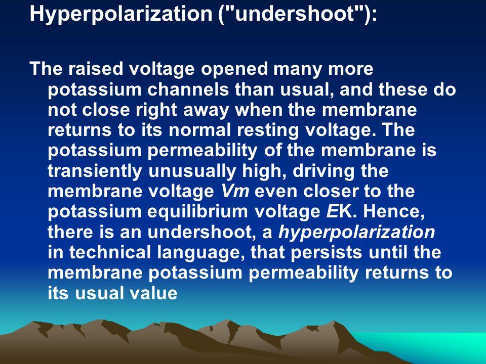 Hyperpolarization (