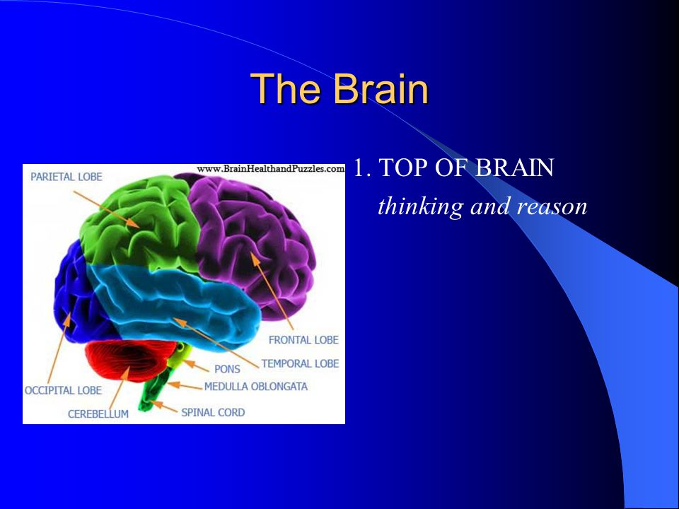 1. TOP OF BRAIN thinking and reason