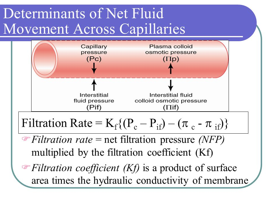 Determinants of Net Fluid Movement Across Capillaries  Filtration rate = net filtration pressure (NFP) multiplied by the filtration coefficient (Kf)  Filtration coefficient (Kf) is a product of surface area times the hydraulic conductivity of membrane Filtration Rate = K f {(P c – P if ) – (  c -  if )}