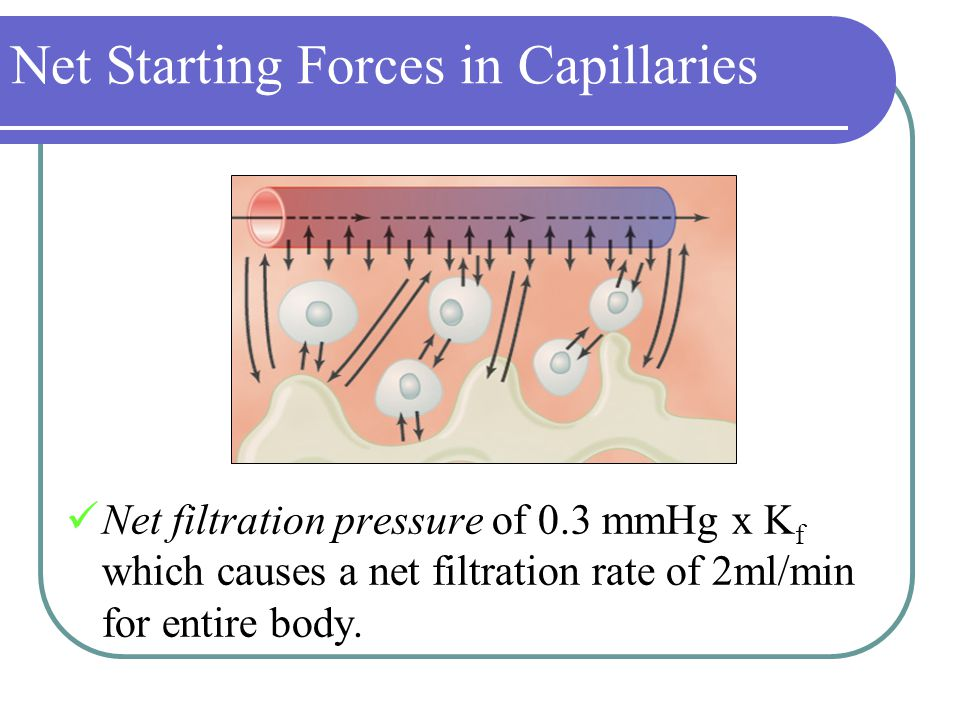 Net Starting Forces in Capillaries Net filtration pressure of 0.3 mmHg x K f which causes a net filtration rate of 2ml/min for entire body.