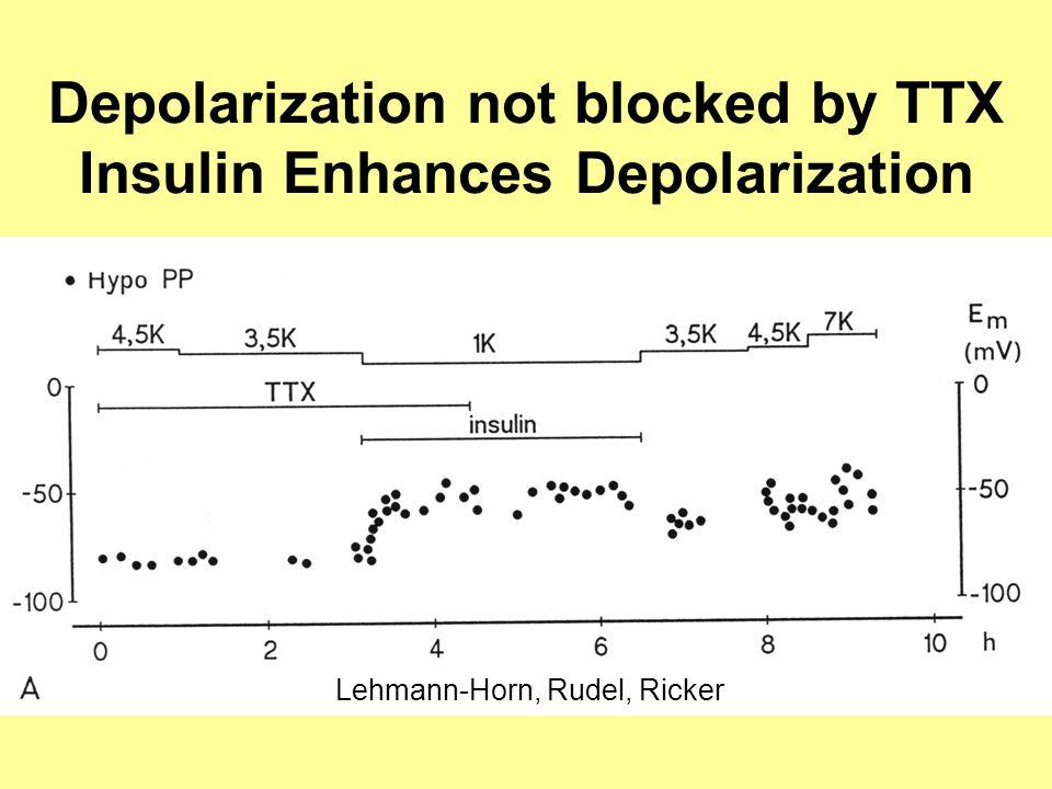 Depolarization not blocked by TTX Insulin Enhances Depolarization Lehmann-Horn, Rudel, Ricker