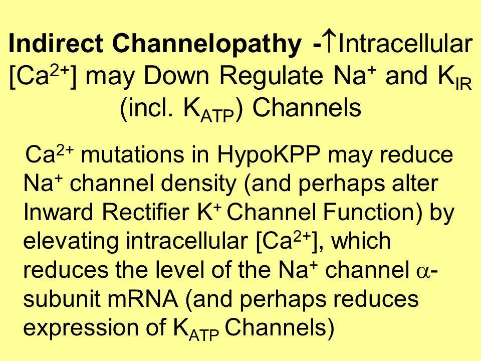 Indirect Channelopathy -  Intracellular [Ca 2+ ] may Down Regulate Na + and K IR (incl.