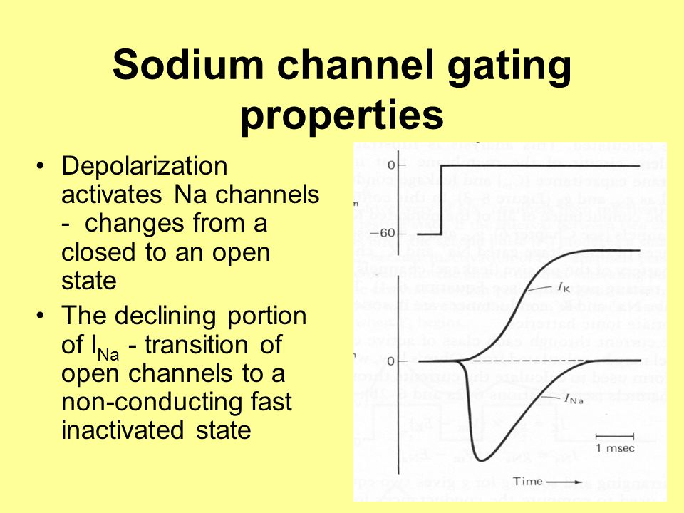 Sodium channel gating properties Depolarization activates Na channels - changes from a closed to an open state The declining portion of I Na - transition of open channels to a non-conducting fast inactivated state