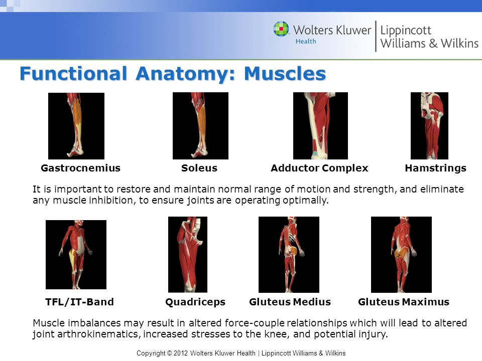 Copyright © 2012 Wolters Kluwer Health | Lippincott Williams & Wilkins Functional Anatomy: Muscles It is important to restore and maintain normal range of motion and strength, and eliminate any muscle inhibition, to ensure joints are operating optimally.