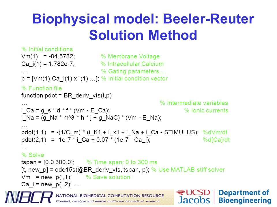 Biophysical model: Beeler-Reuter Solution Method % Initial conditions Vm(1) = -84.5732; % Membrane Voltage Ca_i(1) = 1.782e-7; % Intracellular Calcium … % Gating parameters… p = [Vm(1) Ca_i(1) x1(1) …]; % Initial condition vector % Solve tspan = [0.0 300.0]; % Time span: 0 to 300 ms [t, new_p] = ode15s(@BR_deriv_vts, tspan, p); % Use MATLAB stiff solver Vm = new_p(:,1); % Save solution Ca_i = new_p(:,2); … % Function file function pdot = BR_deriv_vts(t,p) …% Intermediate variables i_Ca = g_s * d * f * (Vm - E_Ca); % Ionic currents i_Na = (g_Na * m^3 * h * j + g_NaC) * (Vm - E_Na); … pdot(1,1) = -(1/C_m) * (i_K1 + i_x1 + i_Na + i_Ca - STIMULUS); %dVm/dt pdot(2,1) = -1e-7 * i_Ca + 0.07 * (1e-7 - Ca_i); %d[Ca]/dt...