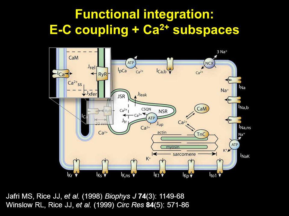 Jafri MS, Rice JJ, et al. (1998) Biophys J 74(3): 1149-68 Winslow RL, Rice JJ, et al.