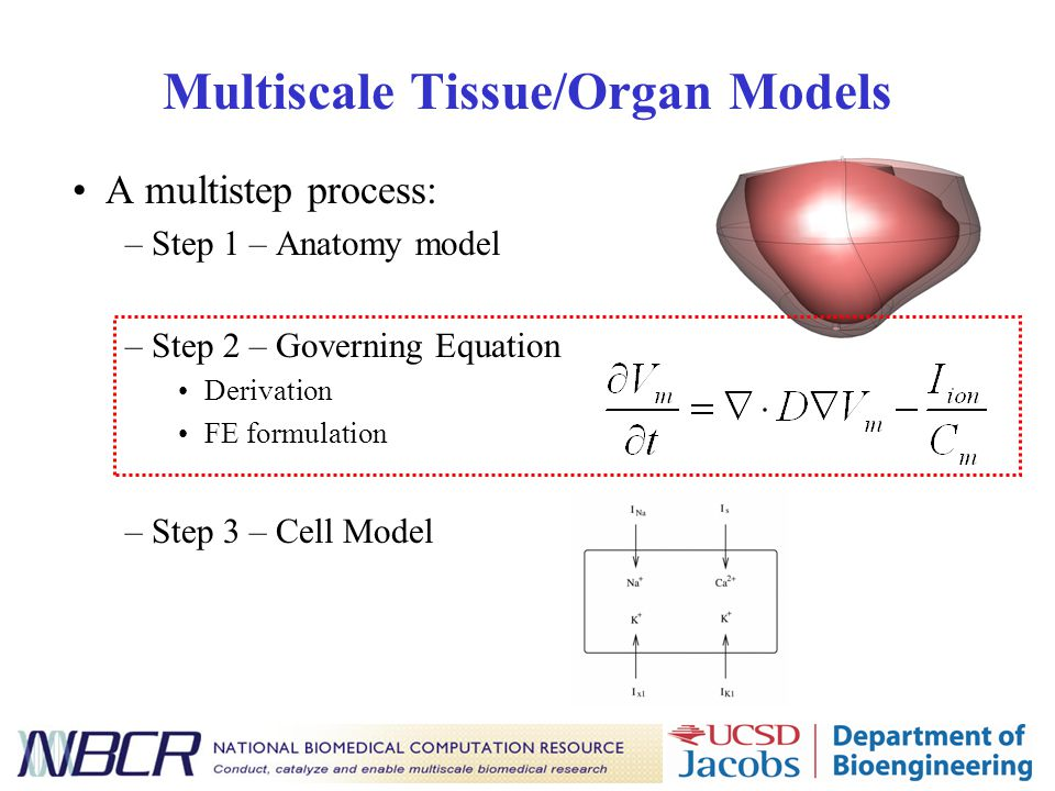 Multiscale Tissue/Organ Models A multistep process: –Step 1 – Anatomy model –Step 2 – Governing Equation Derivation FE formulation –Step 3 – Cell Mode