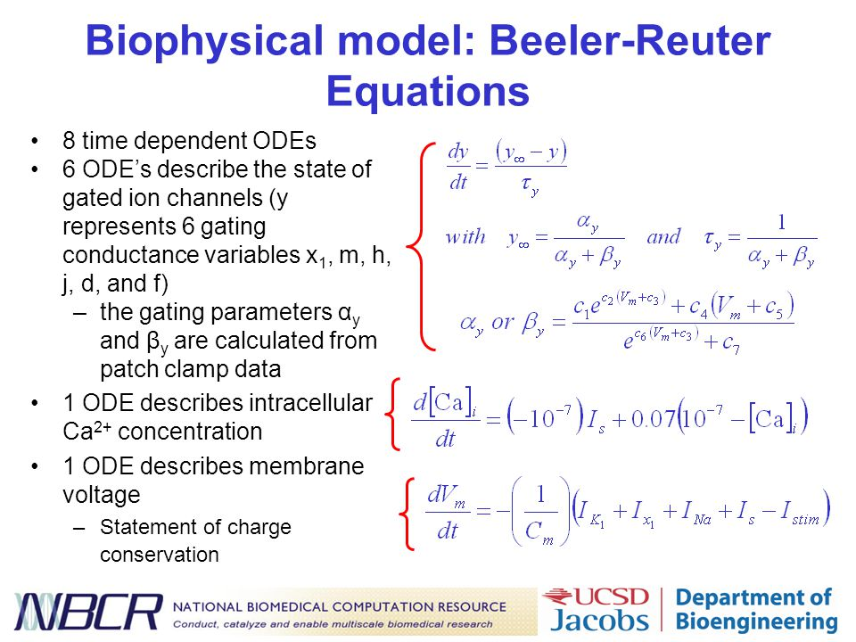 Biophysical model: Beeler-Reuter Equations 8 time dependent ODEs 6 ODE's describe the state of gated ion channels (y represents 6 gating conductance variables x 1, m, h, j, d, and f) –the gating parameters α y and β y are calculated from patch clamp data 1 ODE describes intracellular Ca 2+ concentration 1 ODE describes membrane voltage –Statement of charge conservation