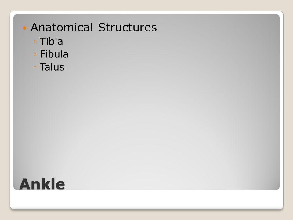 Ankle Anatomical Structures ◦Tibia ◦Fibula ◦Talus