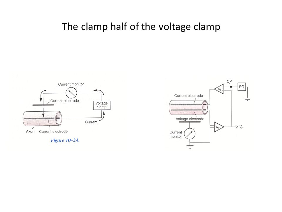 The clamp half of the voltage clamp