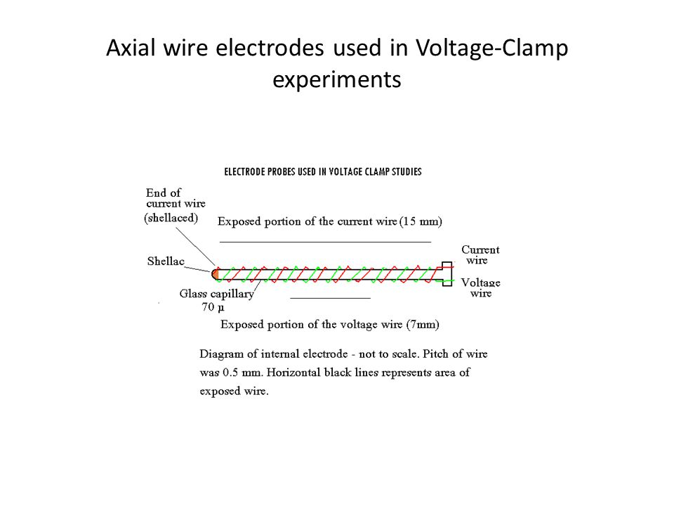 Axial wire electrodes used in Voltage-Clamp experiments