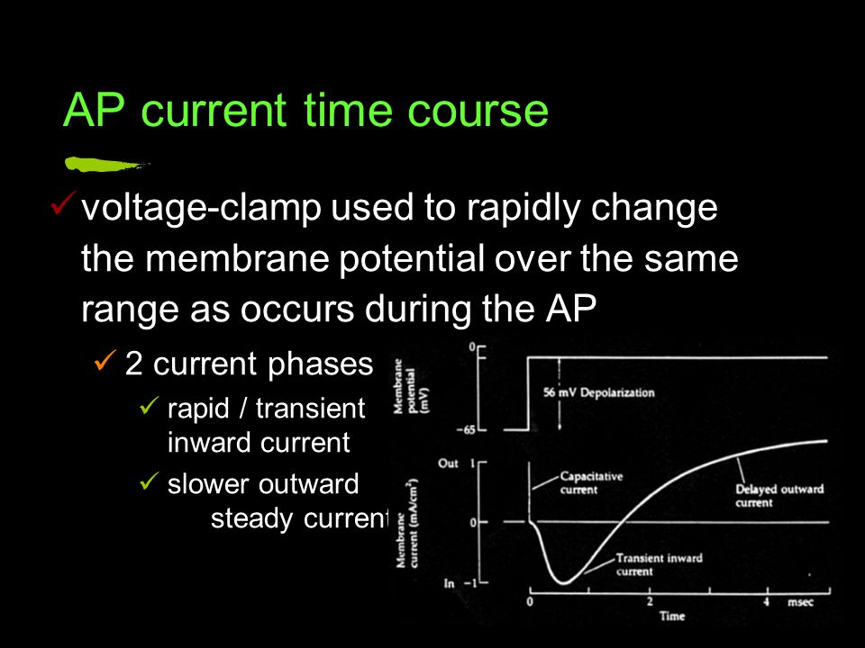 voltage-clamp used to rapidly change the membrane potential over the same range as occurs during the AP 2 current phases rapid / transient inward current slower outward steady current AP current time course