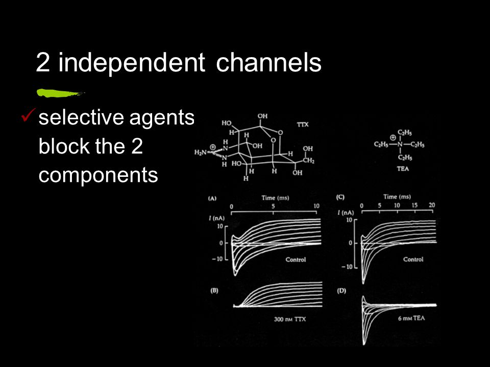 selective agents block the 2 components 2 independent channels