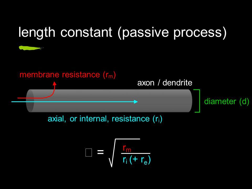 length constant (passive process) axon / dendrite membrane resistance (r m ) axial, or internal, resistance (r i ) diameter (d) r m r i (+ r e ) =