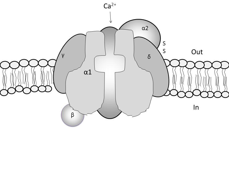 β β α1α1 δ γ α2α2 Ca 2+ SSSS Out In