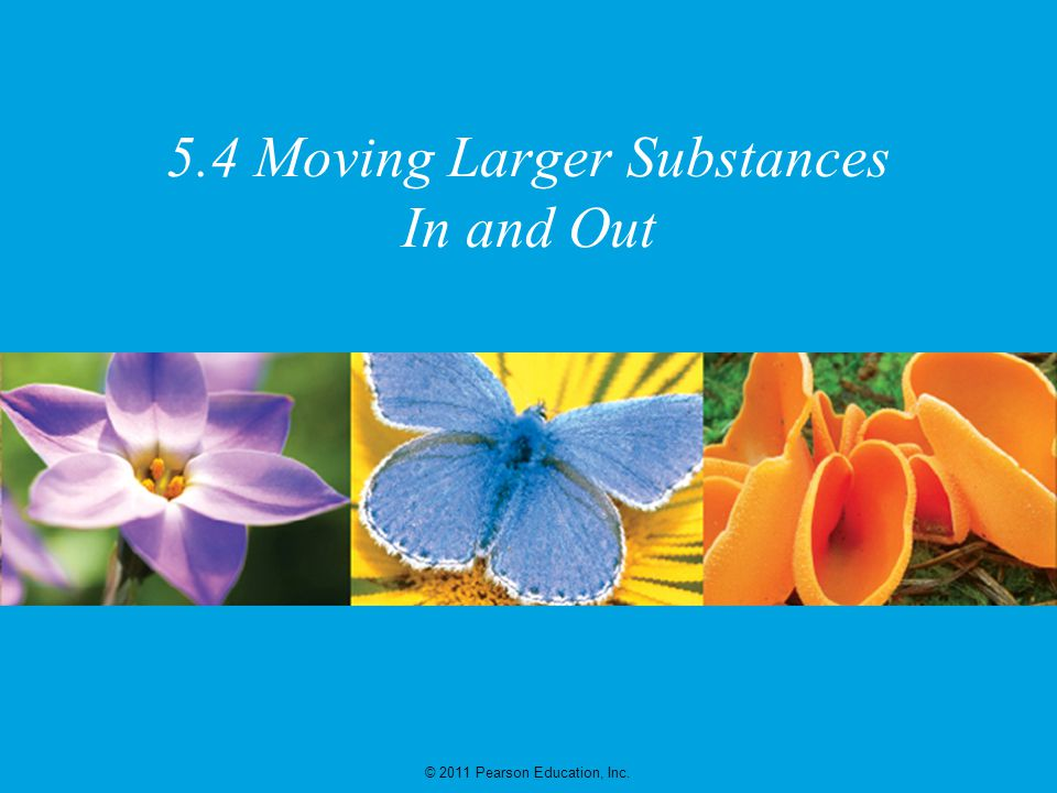 © 2011 Pearson Education, Inc. 5.4 Moving Larger Substances In and Out