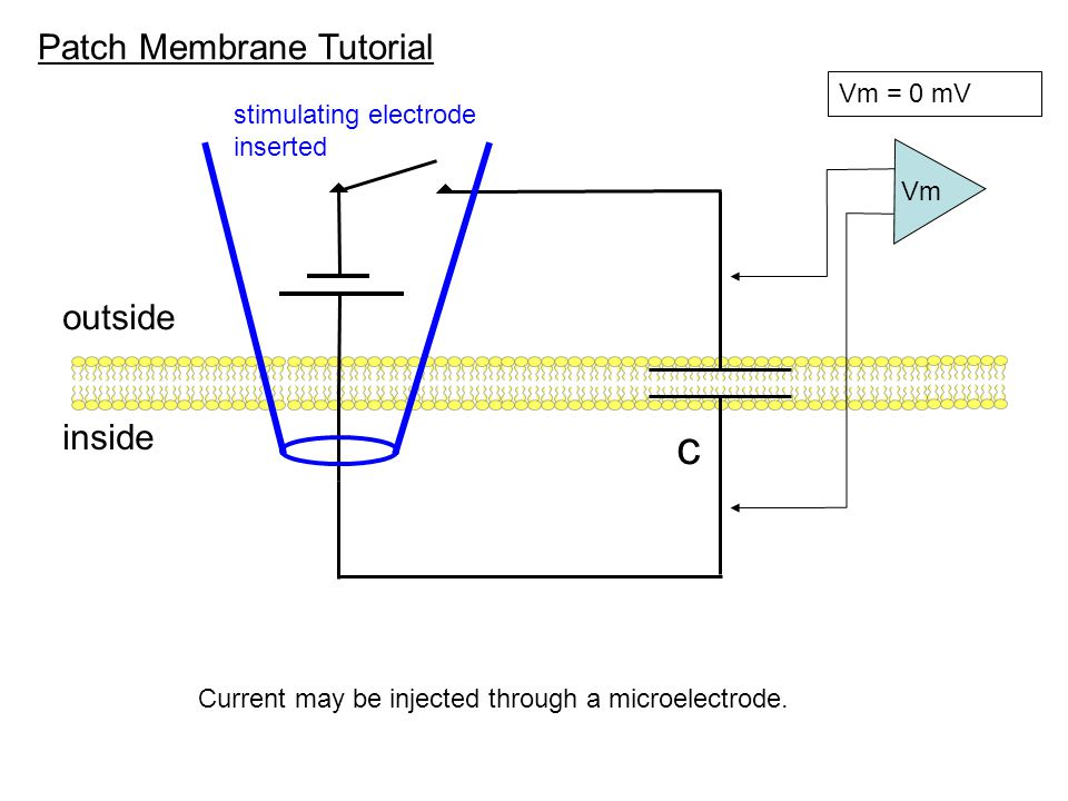 Patch Membrane Tutorial outside inside c Vm = 0 mV Vm Ach-gated channels Current may also be injected by the opening of a channel.