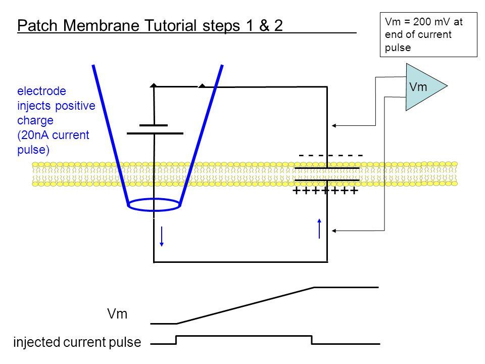 +++++++ Patch Membrane Tutorial steps 1 & 2 ----------- Vm = 200 mV at end of pulse Vm Q = CV dV/dT = 1/C [dQ/dt]; V = 1/C [Q] Icap = C [dV/dt] dV/dT = 1/C [Icap] dQ/dt = Icap