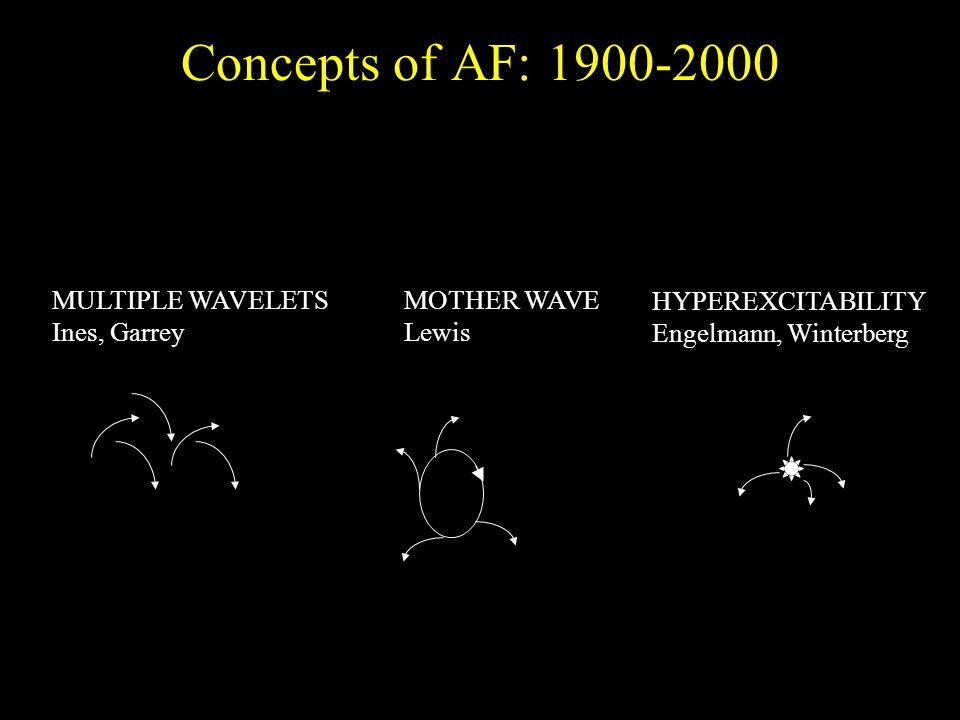 Concepts of AF: 1900-2000 MULTIPLE WAVELETS Ines, Garrey MOTHER WAVE Lewis HYPEREXCITABILITY Engelmann, Winterberg