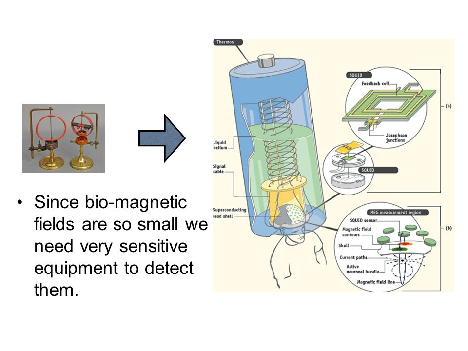 Since bio-magnetic fields are so small we need very sensitive equipment to detect them.