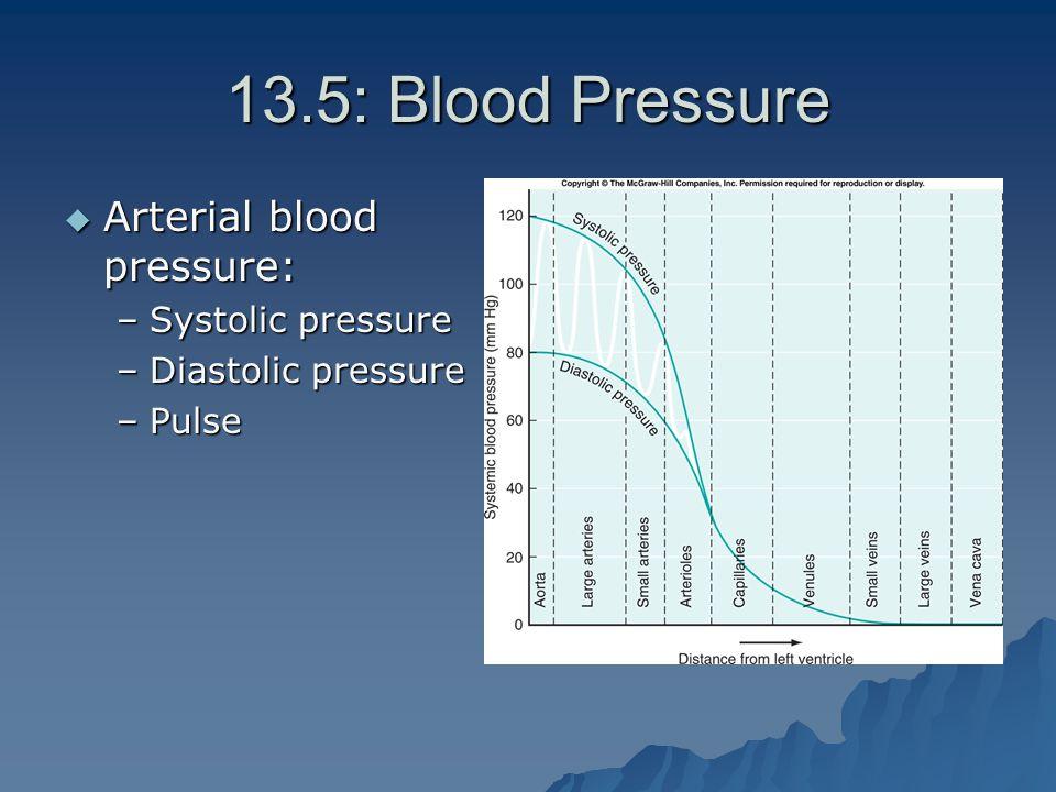 13.5: Blood Pressure  Arterial blood pressure: –Systolic pressure –Diastolic pressure –Pulse