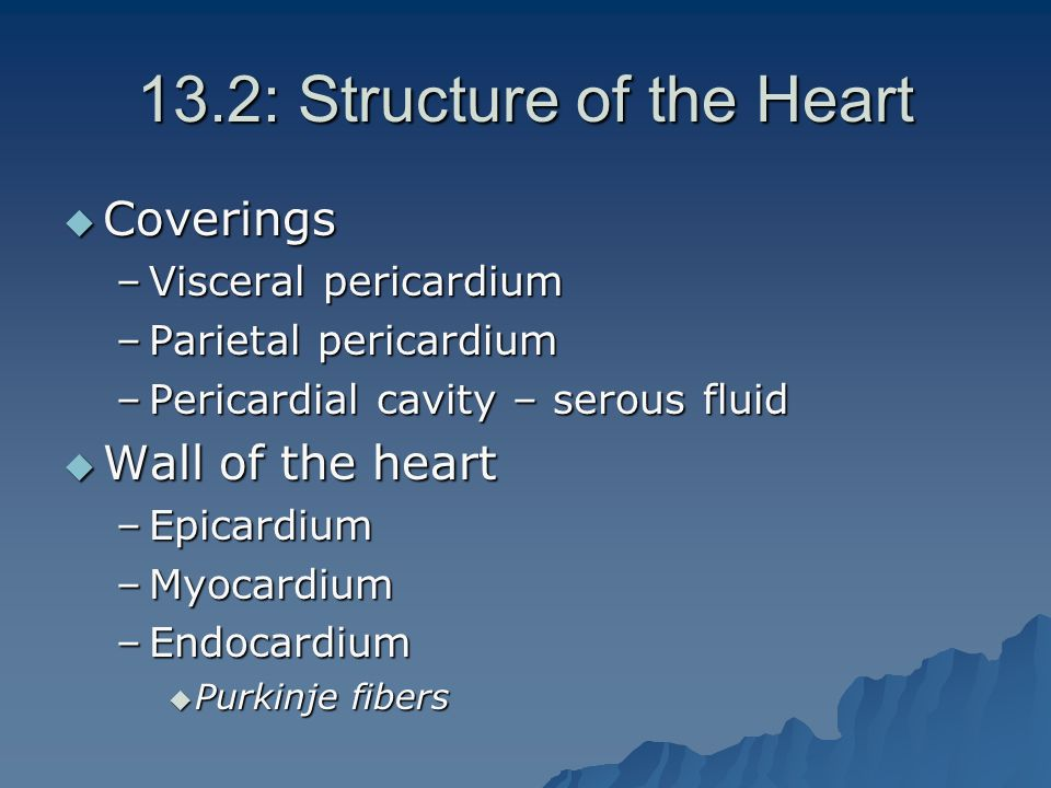13.2: Structure of the Heart  Coverings –Visceral pericardium –Parietal pericardium –Pericardial cavity – serous fluid  Wall of the heart –Epicardium –Myocardium –Endocardium  Purkinje fibers