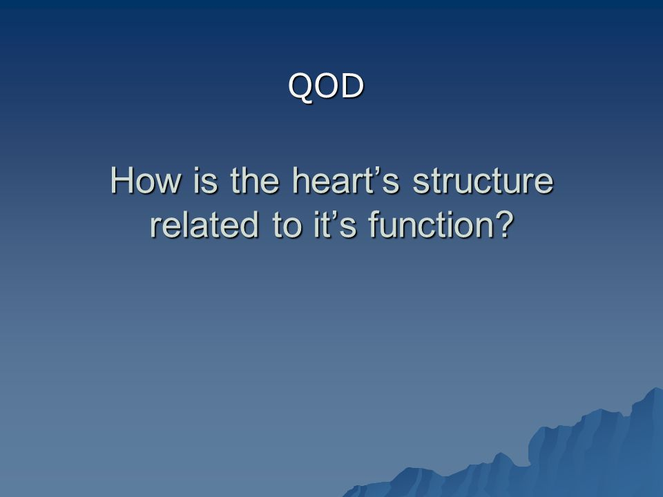How is the heart's structure related to it's function QOD